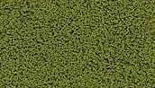 Coarse Turf. burnt grass