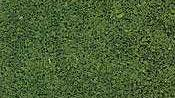 Coarse Turf. Medium green