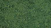 Coarse Turf. Dark green